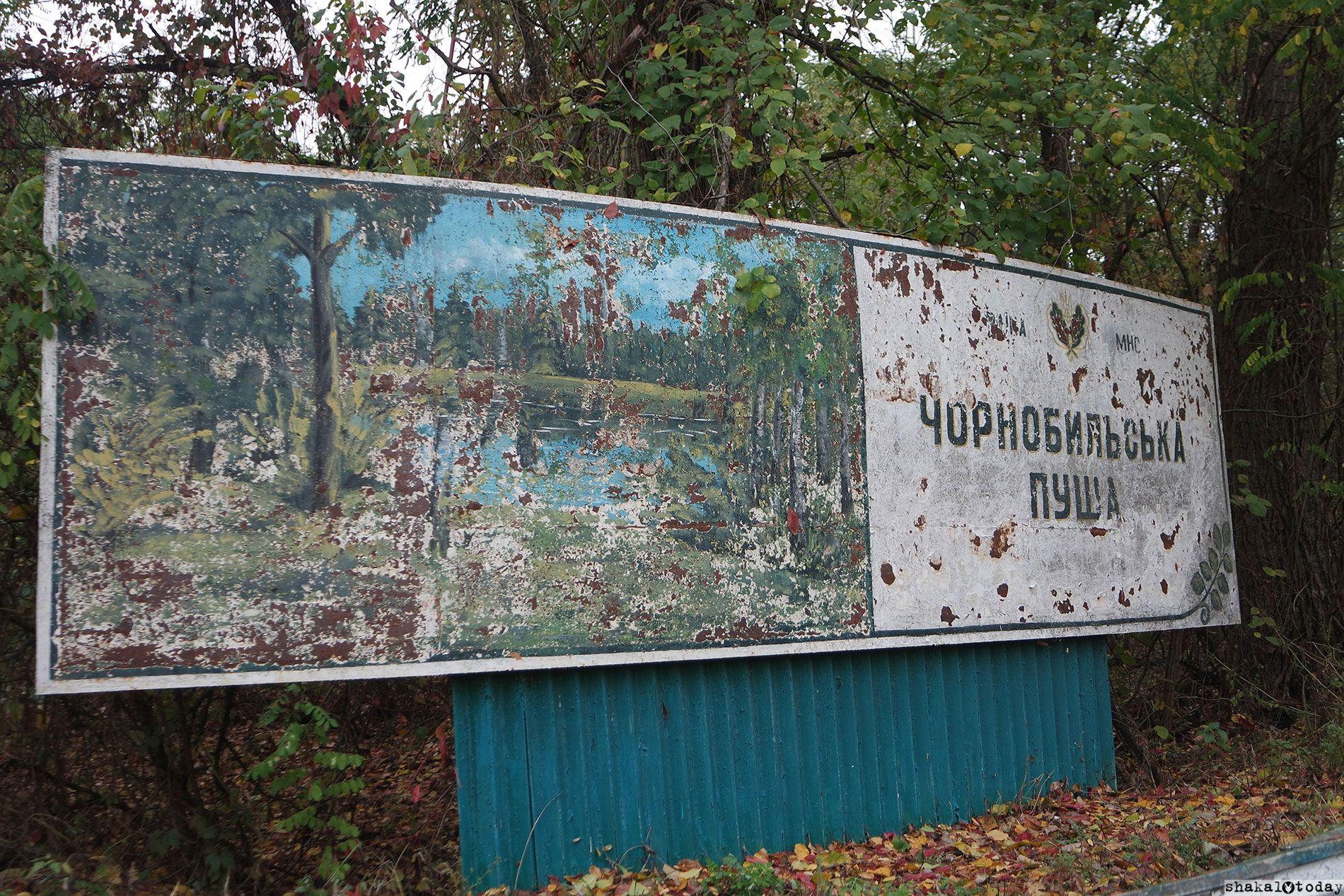 Чернобыльская пуща
