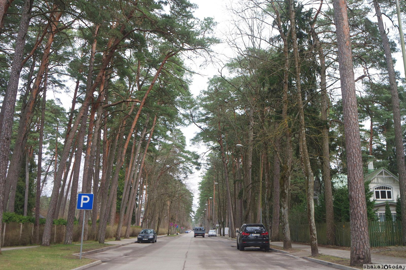 jurmala-shakal-today-0030.jpg