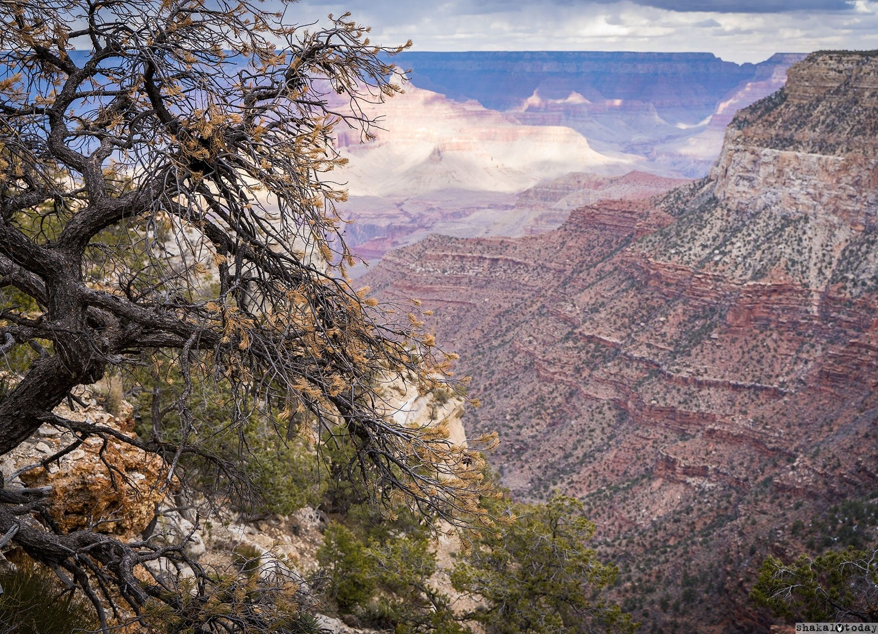 Grand-Canyon-Shakal-Today-0041.jpg